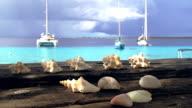 Sea shells on a wooden pier video
