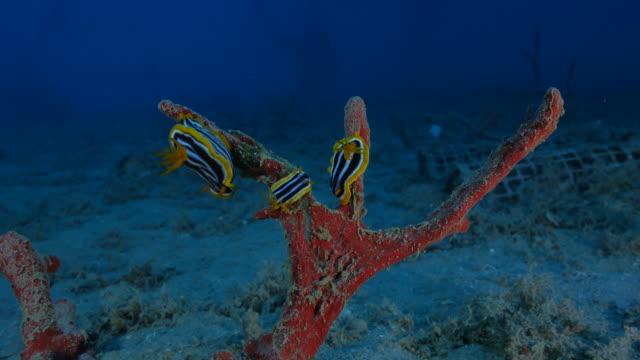 sea slug video