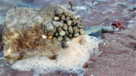 Sea Snails Cling to Rock Around Gentle Sea Waves - Shaldon Harbor WS video