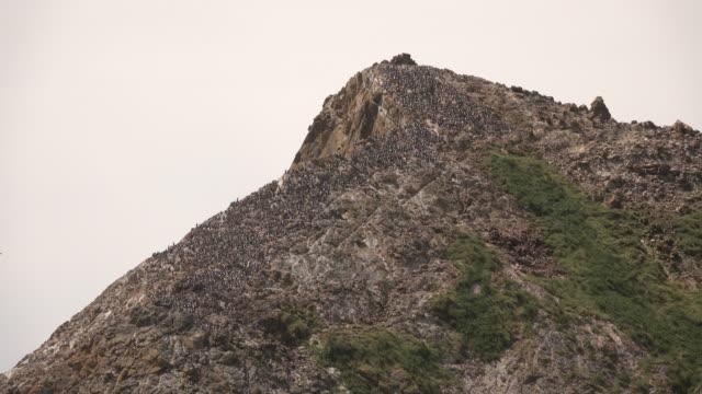 Sea stack nesting murre bird colony False Klamath Cove Redwood National Park California video