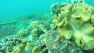 Sea turtle in the tropical sea video