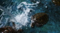 Sea turtle swimming in the pond video