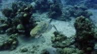 Sea Turtle video