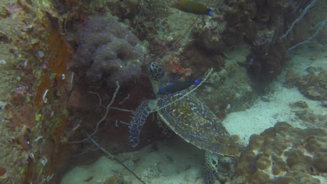 Sea Turtle video