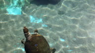 Sea turtle with fishes video
