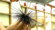 Sea Urchin on hand of diver from Thailand video
