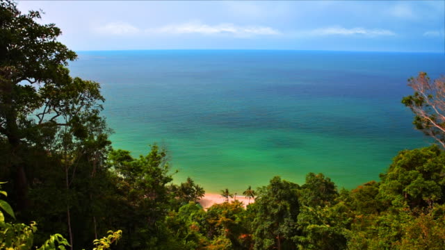 Sea water and sky from tropical trees video