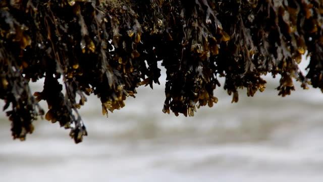 Sea Weed video