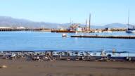 Seabirds on the shore of Santa Barbara Harbor video