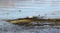 seagull feeding video