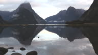 Seagull flying at Milford sound New Zealand video