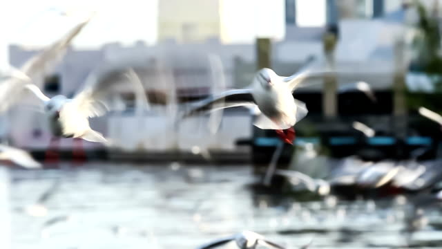 seagull flying on the sea video