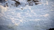 Seagull flying over the sea in slow motion. video