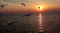 Seagull flying with sunset in evening light video