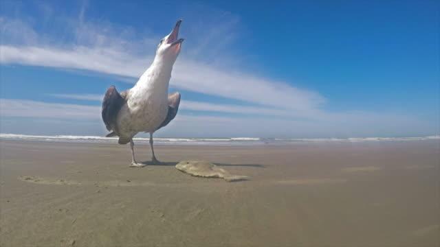 Seagull in Brazil video