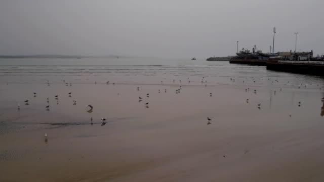 Seagull in sand on beach, Morocco, Essaouira video