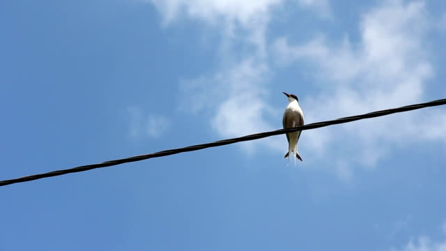 Seagull sitting on the line. video
