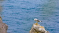 Seagull standing on a rock by the sea video