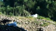 Seagull video