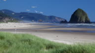 HD Seagulls at Cannon Beach OR video