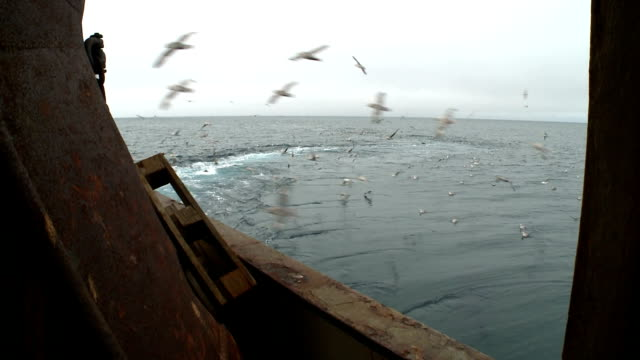 Seagulls behind a board of the fishing trawler. video