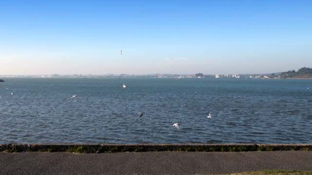 Seagulls fly around Poole Harbour with footpath video