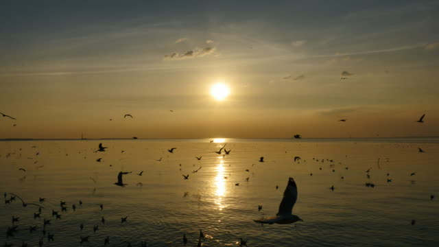 Seagulls Flying Above Sea At Sunset. video