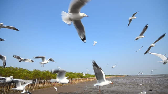 Seagulls Flying at Mangrove Forest Nearby the Sea video