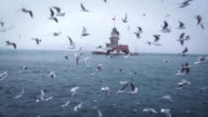 Seagulls flying in front of the Maiden's Tower video