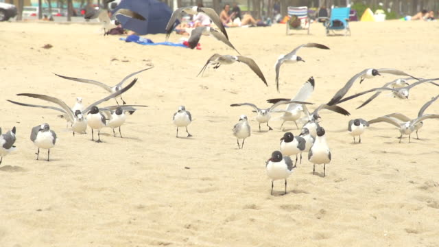 HD SLOW-MOTION: Seagulls Flying On The Beach video