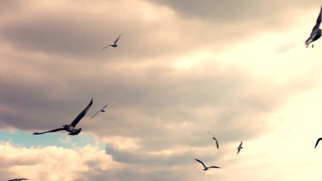 HD: Seagulls Flying Slow Motion video