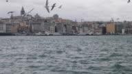 Seagulls in Bosphorus, Istanbul, Turkey video