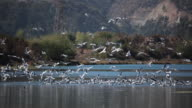 Seagulls on a Lagoon video