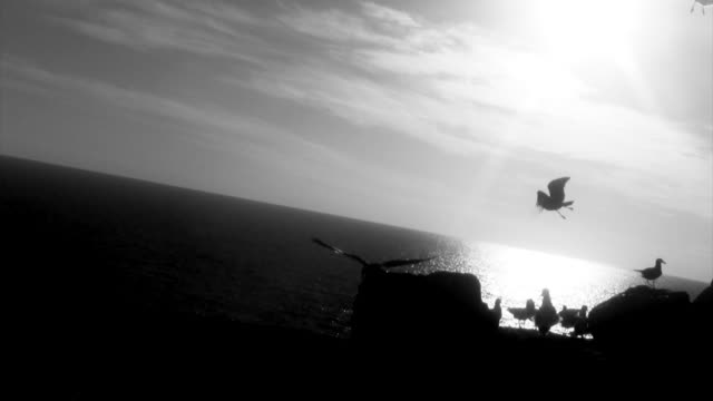Seagulls on cliff overlooking sea black and white video