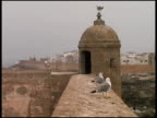 Seagulls Sit On Castle Wall And Turret video