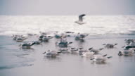 Seagulls Sitting on the Frozen Ice-Covered Sea in Slow Motion video