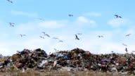 Seagulls, sky and garbage video