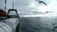 Seagulls soar behind a board of the fishing trawler. video