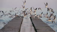Seagulls Soar off the Concrete Pier video
