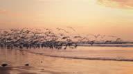 seagulls wide video