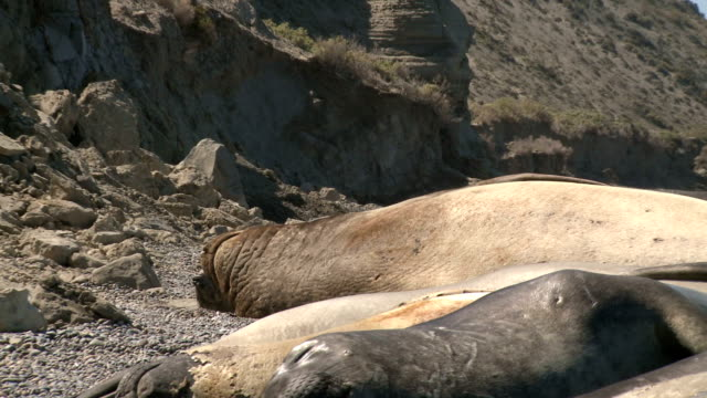 seal rookery video
