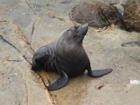 Seal video