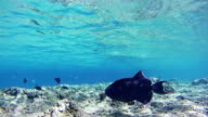 Sealife Background in the Red Sea, Egypt video