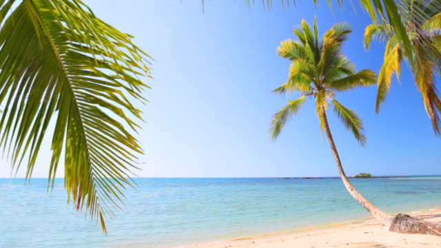 Seascape and palmtrees at Seychelles video