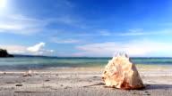 Seashell and woman in bikini on tropical beach video