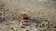 Seashell  on the sand beach video