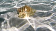 Seashell under water video