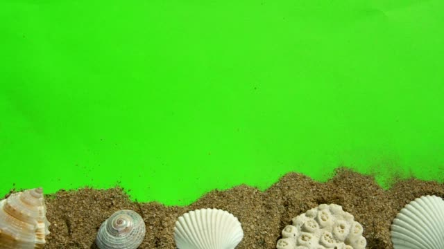 Seashells and Sand on a Green Screen. video