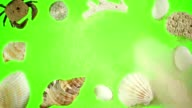 Seashells and Sand on a Green Screen video