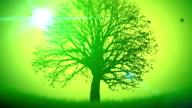 Seasons - Spring video